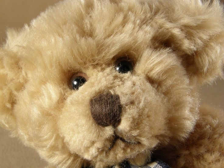 FREEZE stuffed animals to kill dust mites and reduce allergies