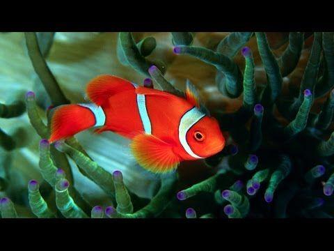 Kırmızı Balık #tekerleme  #okulöncesi #tekerlemeler #okulöncesitekerleme #okulşarkıları #balık
