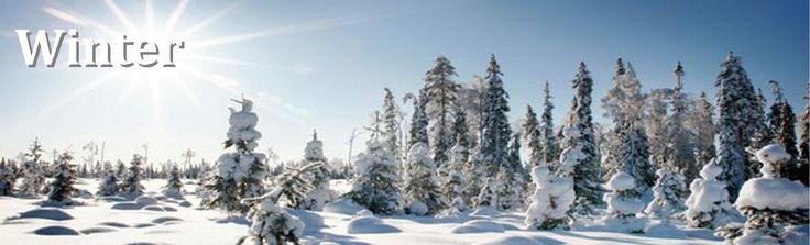 Winter scenery in February around Saija Lodge, Jokijärvi, Taivalkoski, Kuusamo Lapland, Finland