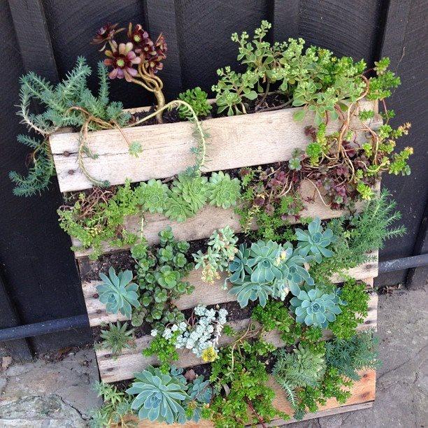 Vertical Garden Palette Succulents Pallet Art