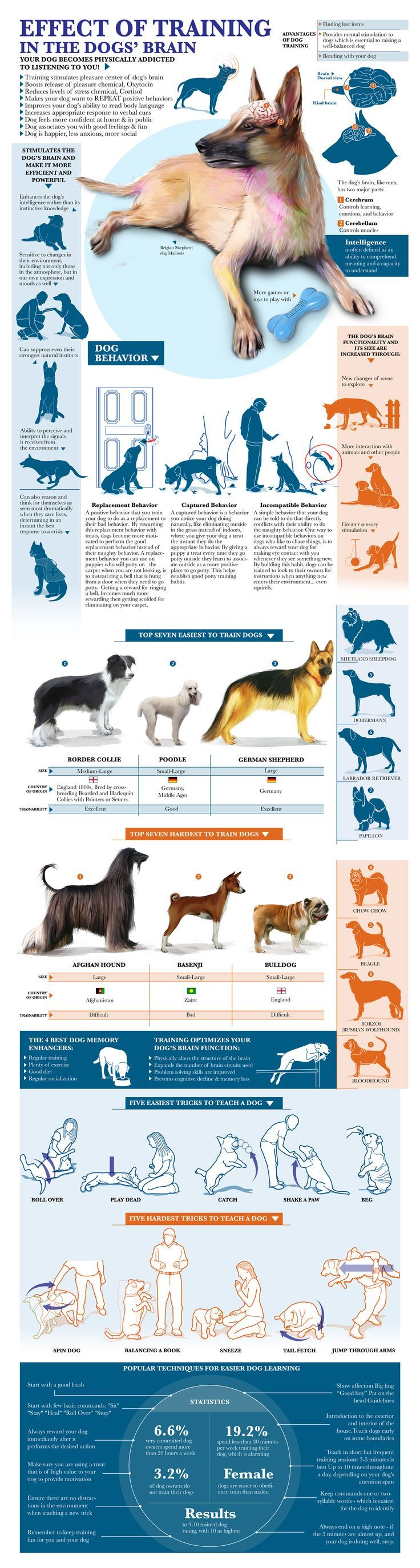 Effect Of Training In The #Dog Brain #infographics #pets
