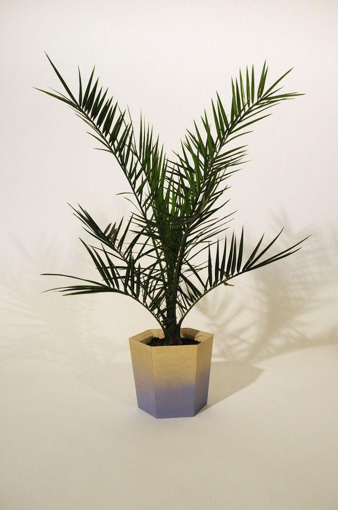 Hexagonal Plant Pot Medium – Primary Grey