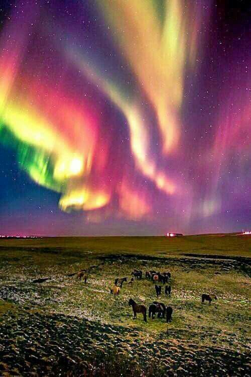 Wow!!! There must have been an Incredible Solar Storm, to produce this gorgeous Aurora Borealis Display and so early after sunset you can still see a bare afterglow. The show is so bright you can see the horses grazing. Rare.