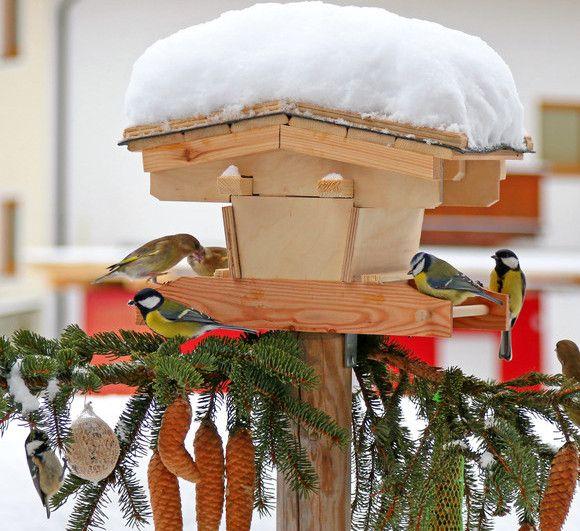 Met name in de winter en de herfst is het fijn voor vogels als mensen vogelvoer strooien. Deze krans van vogelvoer is eenvoudig te maken en de vogels zullen ervan smullen.
