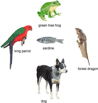Classification of Vertebrates Reading Comprehension