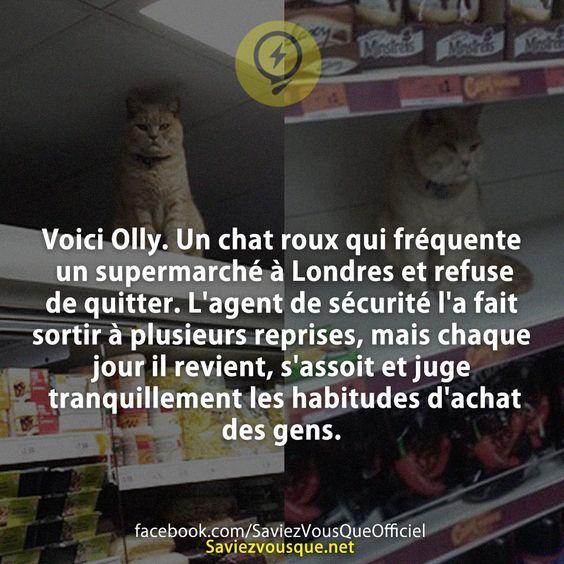 Voici Olly. Un chat roux qui fréquente un supermarché à Londres et refuse de quitter. L'agent de sécurité l'a fait sortir à plusieurs reprises, mais chaque jour il revient, s'assoit et juge tranquillement les habitudes d'achat des gens. | Saviez-vous que ?
