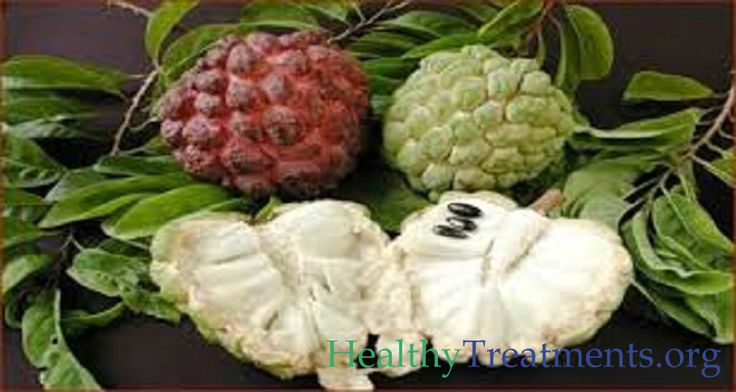 The extract of the graviola fruit (also known as guyabano or soursop) can kill the malignant cells of 12 different types of cancer.