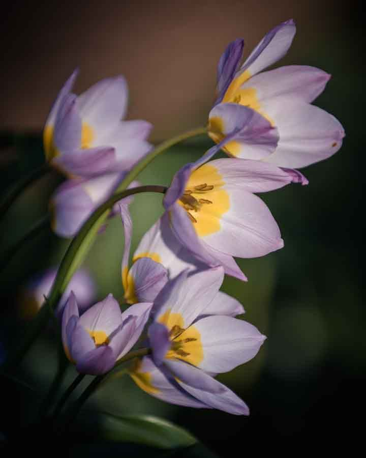 Purple and yellow flowers in the sun. Image©K Woodland/K Woodland Photography.