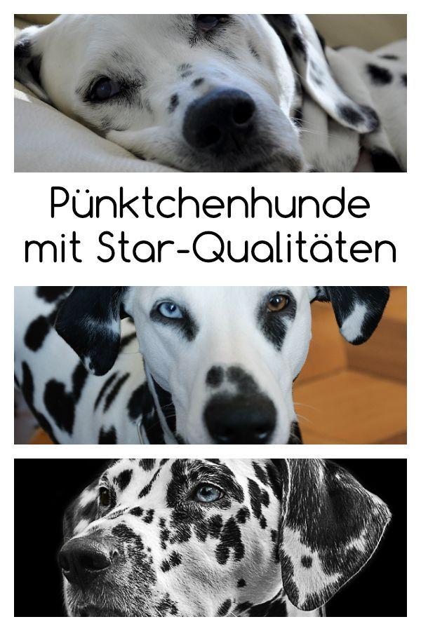 Dalmatiner Punktchenhund Mit Star Qualitaten Hunde Rassen