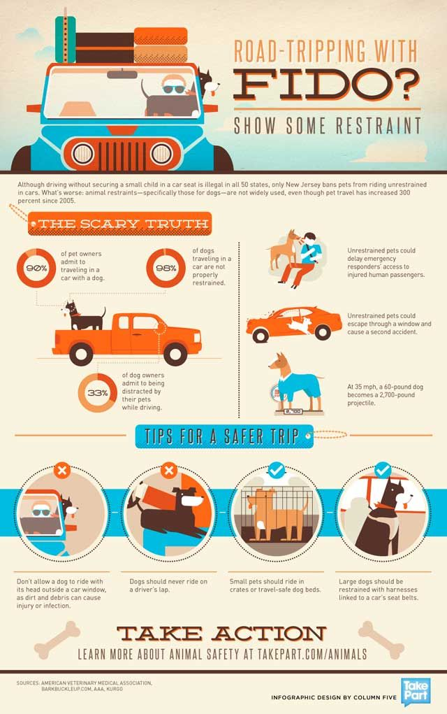 Road-tripping with Fido Infographic