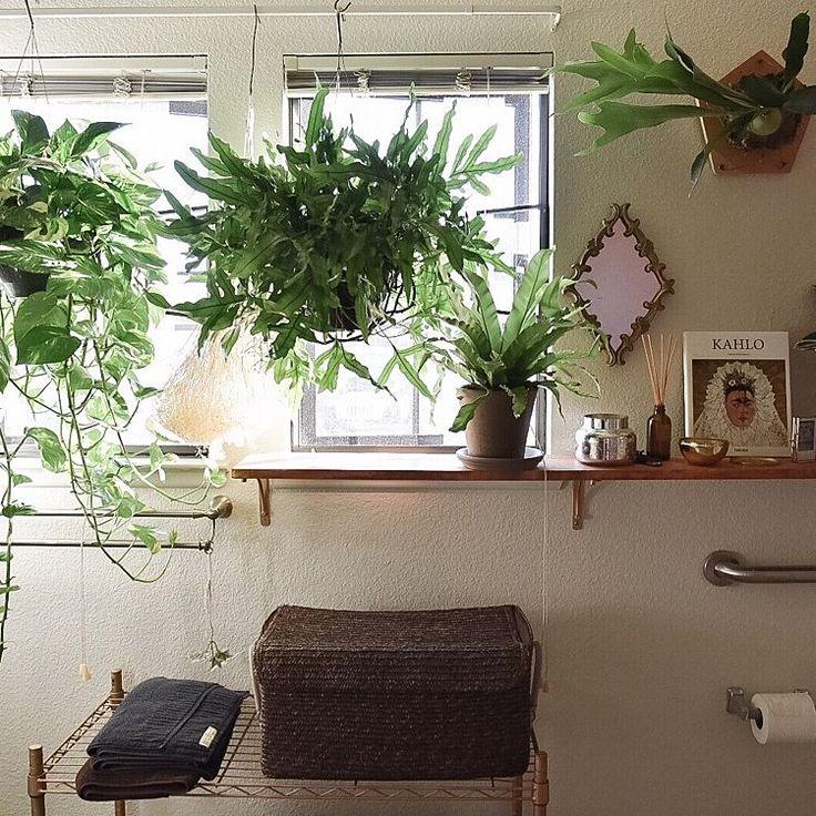 シダ植物/Boho Style/Anthropologie/Urban Jungle/ボタニカルライフ…などのインテリア実例 - 2016-10-10 02:49:51   RoomClip(ルームクリップ)