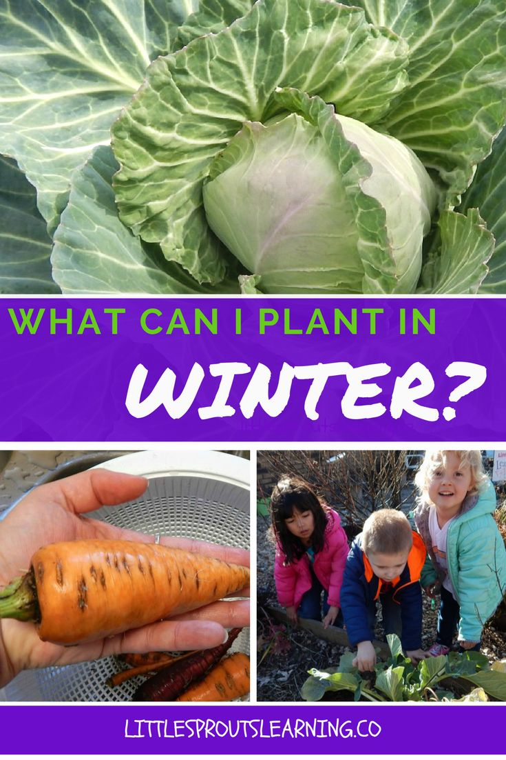 15423 best winter crops images on pinterest winter vegetable