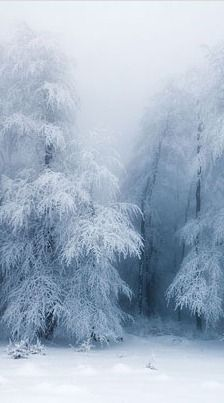 winter white - reminds me of a poetry 'Stopping By Woods on a Snowy Evening' by Robert Frost