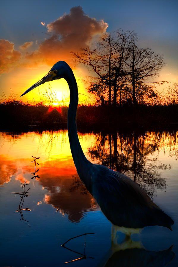 ✯ Sunset Silhouette