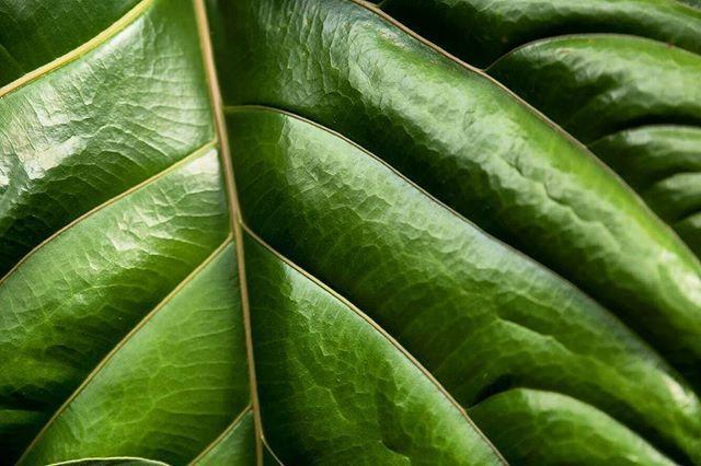 Love for nature textures . #nature #naturetexture #naturephotography #naturelovers #leaf #texture #texturephotography #green #greenphoto #life