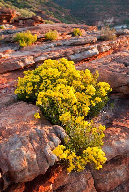 Wildflowers of Western #Australia - Australian Geographic