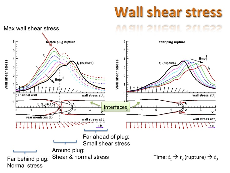 Wall shear stress during plug propagates and ruptures in channel. Numerical computation. Solid curves: wall shear stress behind rear meniscus tip before rupture or along whole channel wall after rupture. Dashed curves: wall shear stress in front of rear meniscus tip before rupture. ASME SBC 2011.
