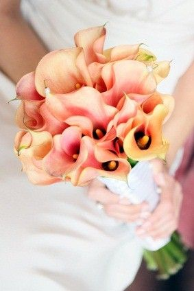 Coral calla lilies.  Like the mix of lighter colors with the brighter calla lilies.  Like the orange and peach combo.