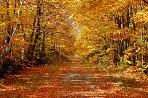 Beautiful in the Autumn. Manitoulin Island, Ontario, Canada