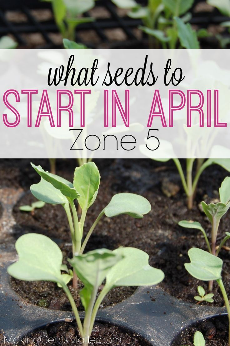 What To Plant In April In Your Zone 5 Garden Gardening For
