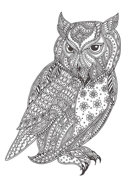 Mejores 28 imágenes de Animales en Pinterest   Dibujo de búhos ...
