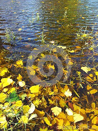 Leaves on lake, autumn water small waves background.