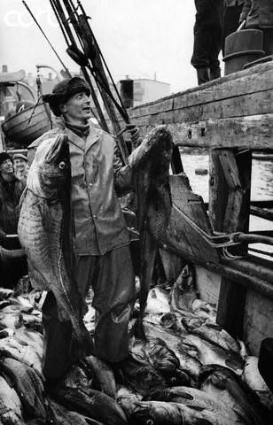 A Norwegian fisher holds two of the catch of codfish