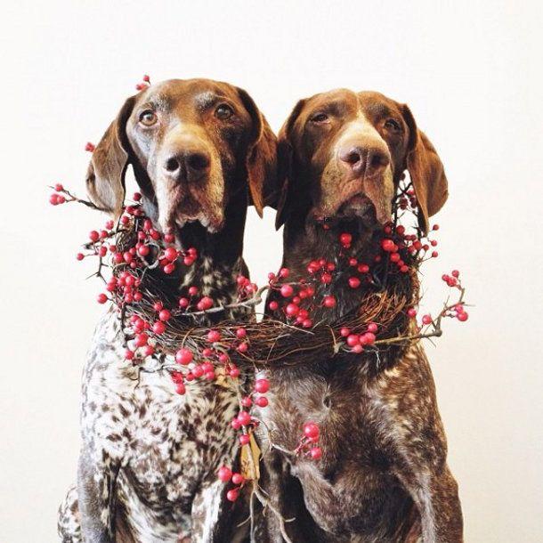 Kerstgroet van Gus en Travis « EYEspired
