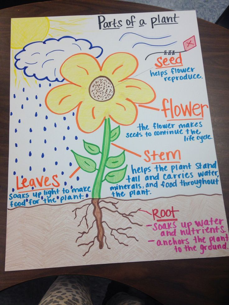 Parts of a plant anchor chart | Teaching | Pinterest
