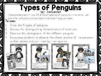 Polar Animals - Centers and Circle Time Preschool Unit