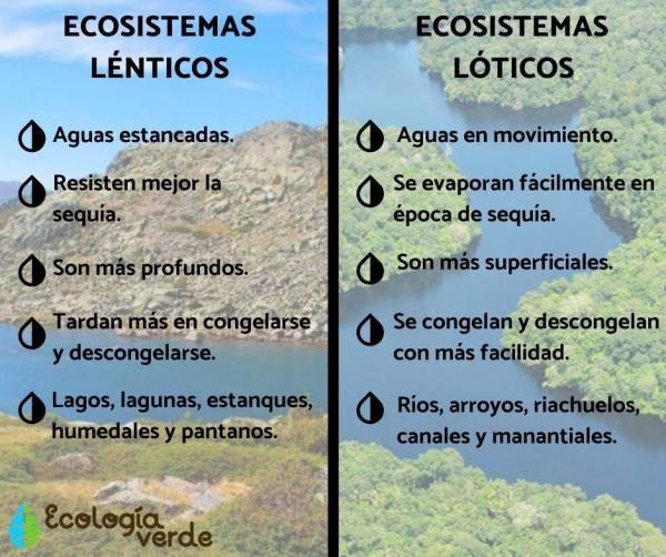 Ecosistemas Lóticos Qué Son Características Y Ejemplos Ecosistemas Tipos De Ecosistemas Ecosistema Acuático