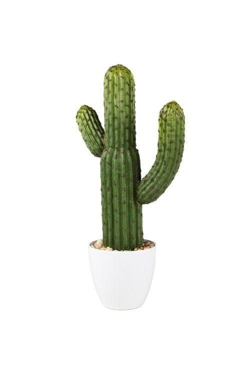 Cactus Living Room