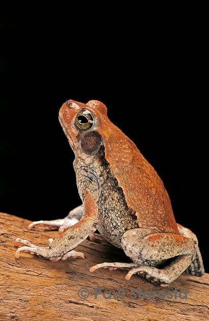 2020 Best Images About Reptiles Amp Amphibians On Pinterest