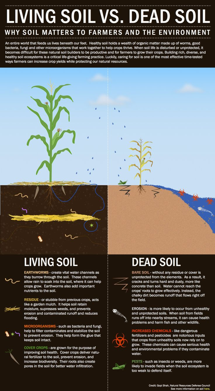 A graphic depicting the traits that make one soil healthy and another unproductive.