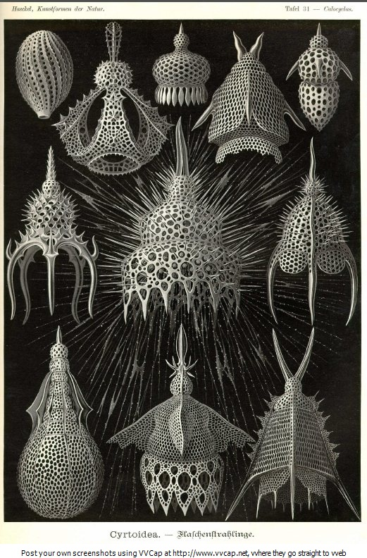 Cryptoidea by Ernst Haeckel