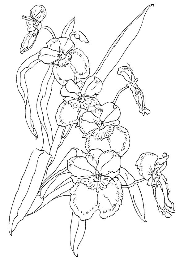 Orchid Coloring Pages Best Coloring Pages For Kids Flower Drawing Flower Coloring Sheets Flower Coloring Pages