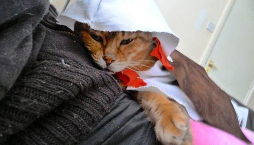 Assassin S Creed  Cats Pet