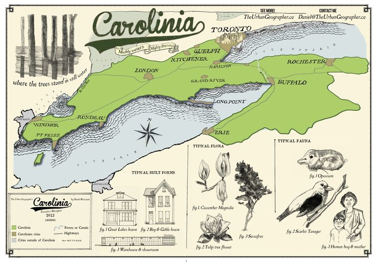 Carolinian life zone, true Carolinian forest a Canadian term only exist in Lake Erie peninsulas