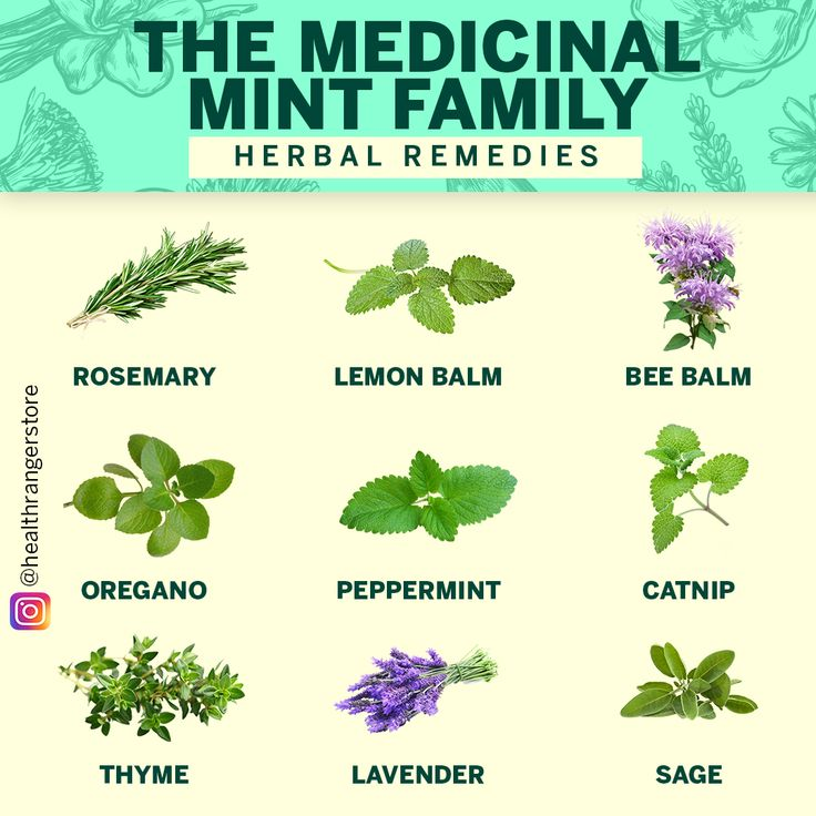 Herbal remedies the medicinal mint family with images