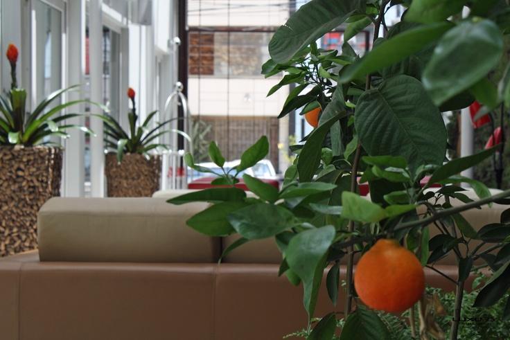 Un Naranjo al lado del muro Vivo