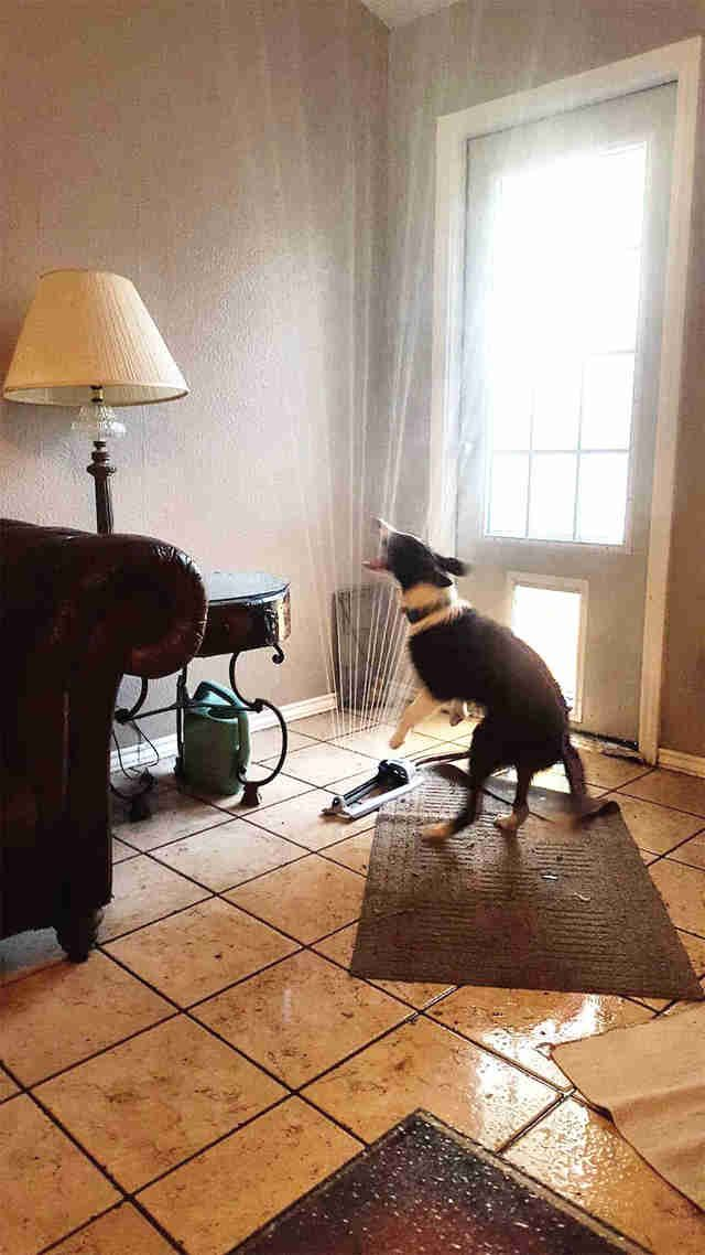 Dog Discovers Best Way To Stay Cool During Summer Heat Funny Animal Pictures Funny Dogs Funny Animals
