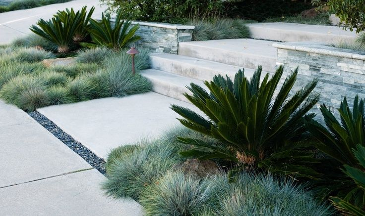 asparagus fern & sago palm planting companion - Google Search