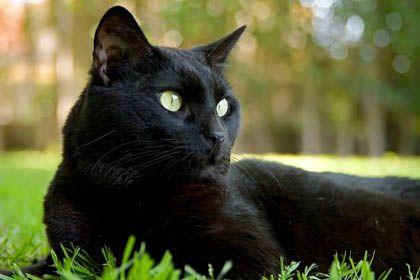 Home remedies for cat diarrhea