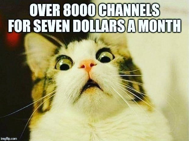 That Is Real Get This Link Copy And Paste It In Your Browser Tv Streaming At Its Finest Get The Package For All Your Tv Funny Cat Memes Scared Cat