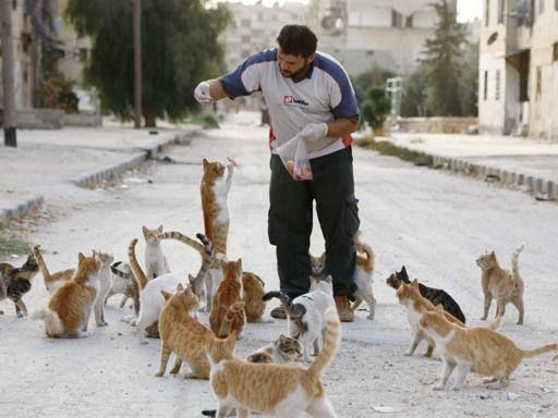 #Aleppo, l'uomo che sfama i #gatti #randagi
