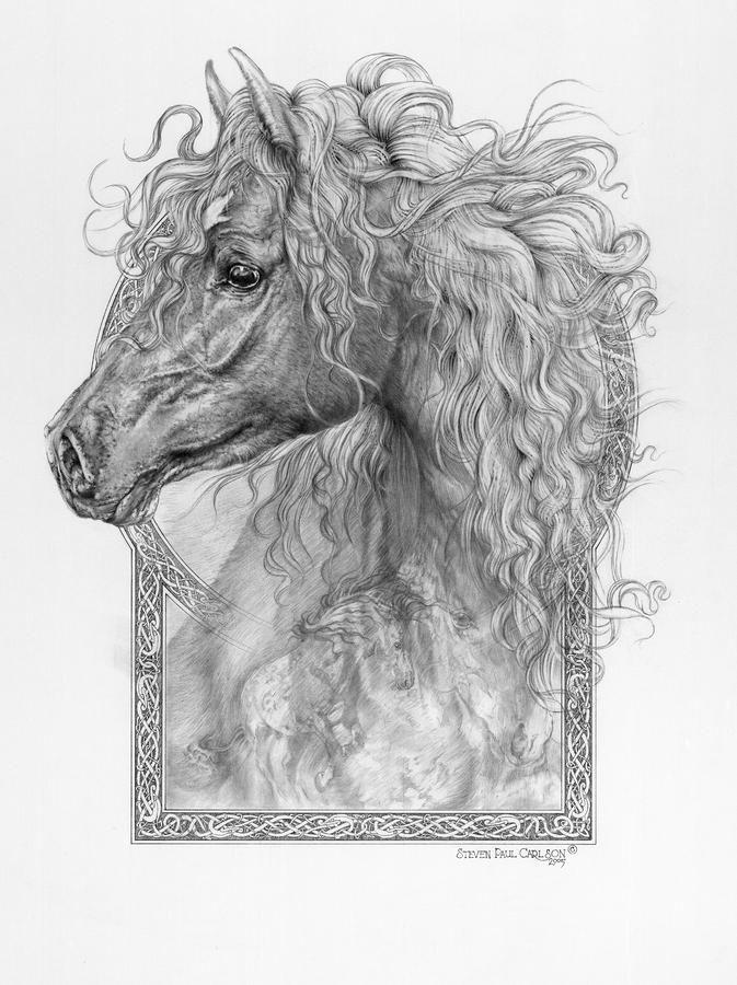 equus caballus horse the divine gift drawing equus caballus horse the