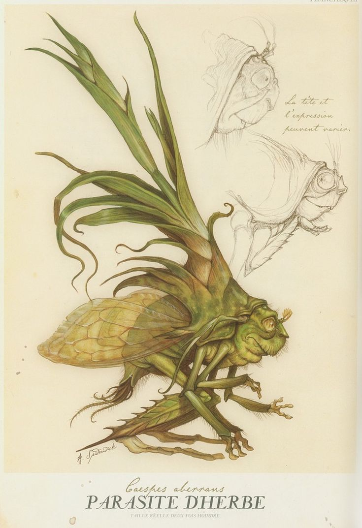 If at night you hear something that sounds like a cricket, but just not quite  ..  this is most likely what/who you are hearing.  Tony DiTerlizzi