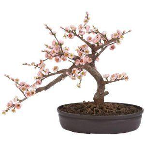 Cherry Blossom Bonsai Silk Tree: Decor, Bonsai Trees, Cherries Blossoms, Blossoms Trees, Blossoms Bonsai, Natural, Cherry Blossoms, Silk Trees, Bonsai Silk