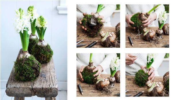 DIY: Hyacintkugler med mos | femina.dk