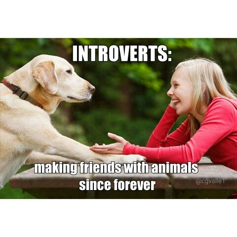 Introverts: making friends with animals since forever.